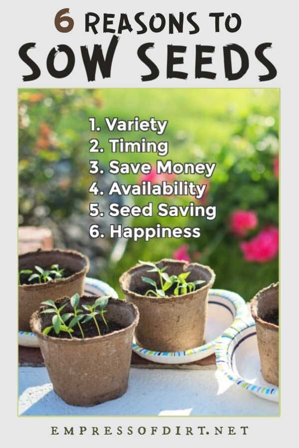 Advantages to Sowing Plants from Seed