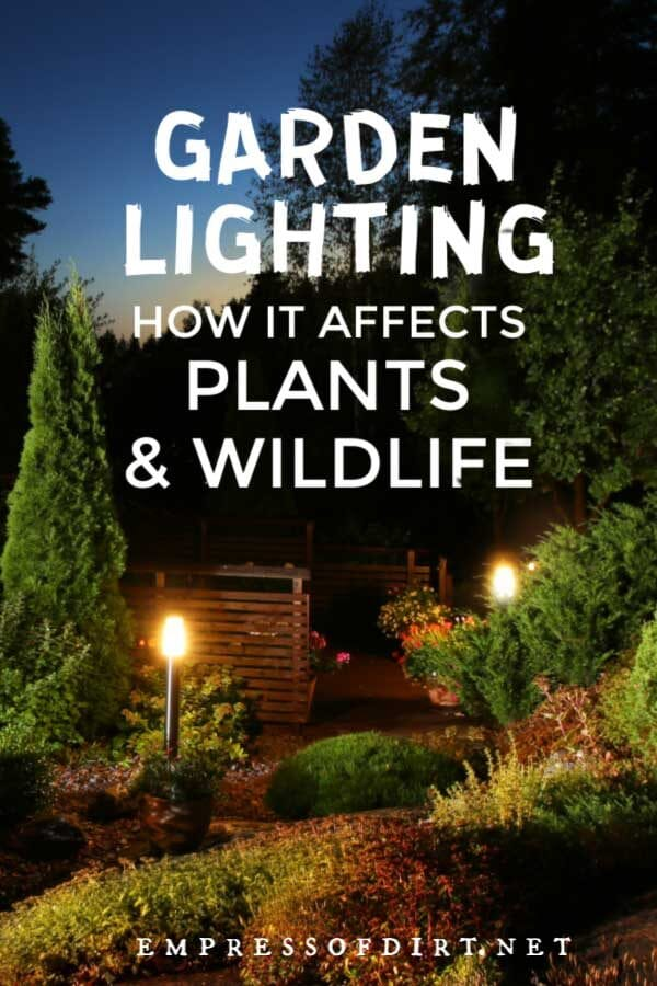 How Light Pollution Affects Life in the Garden