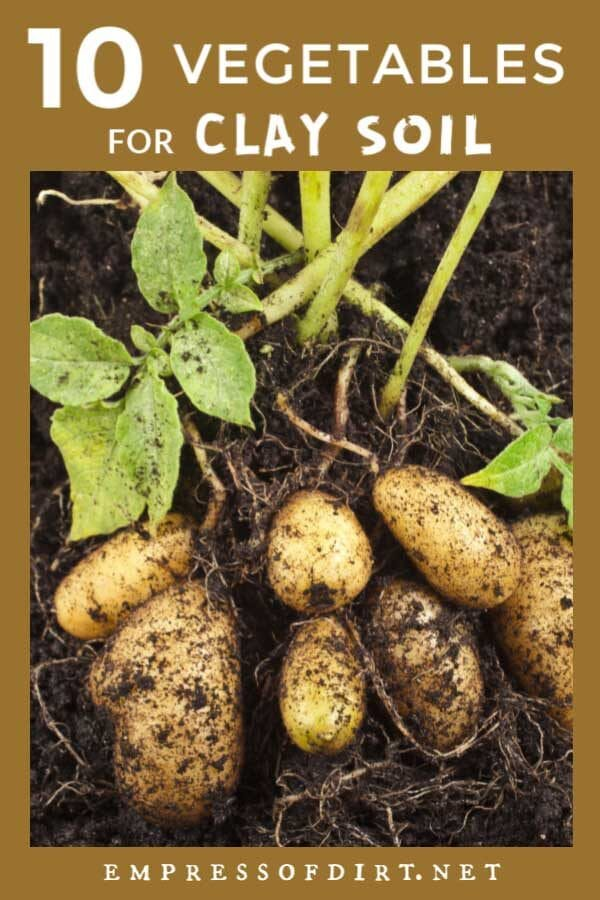 10 Best Vegetables for Clay Soils