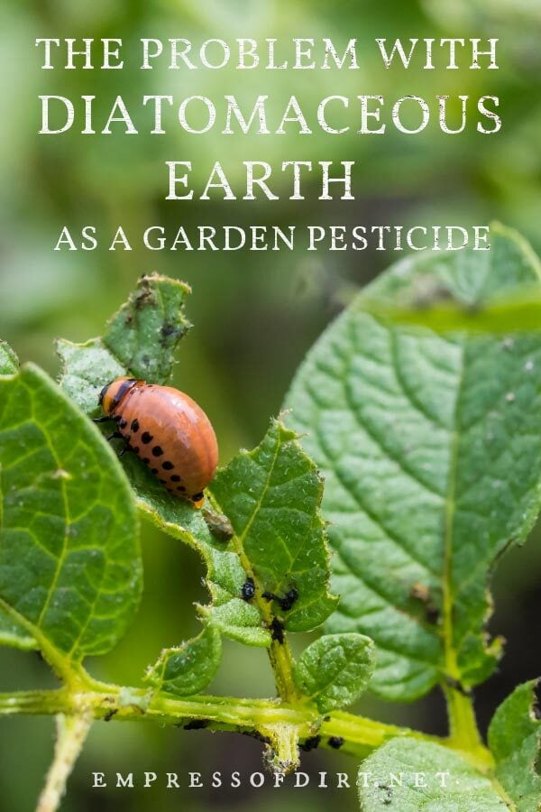 Garden pest on potato plant. Is this a use for diatomaceous earth?