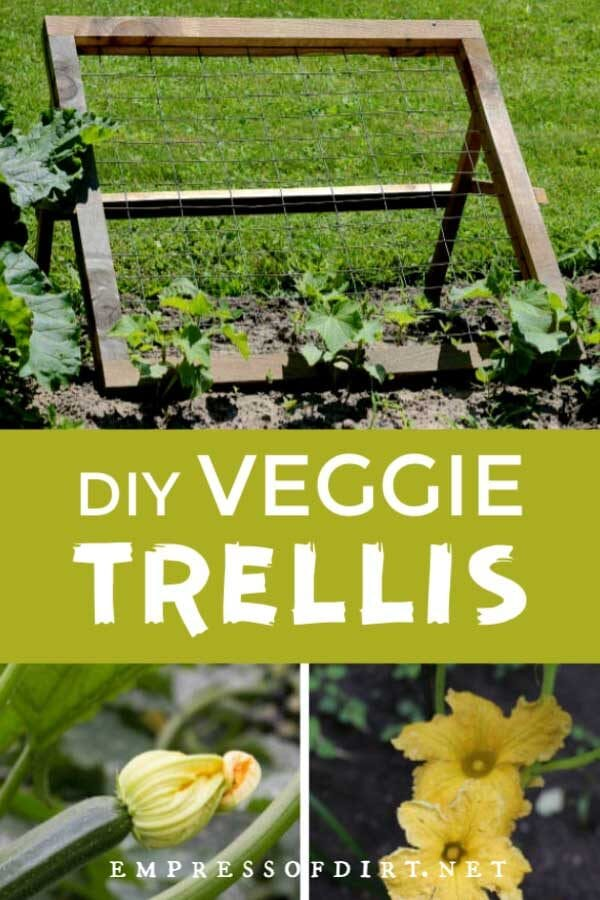 DIY Trellis for Climbing Fruits and Veggies