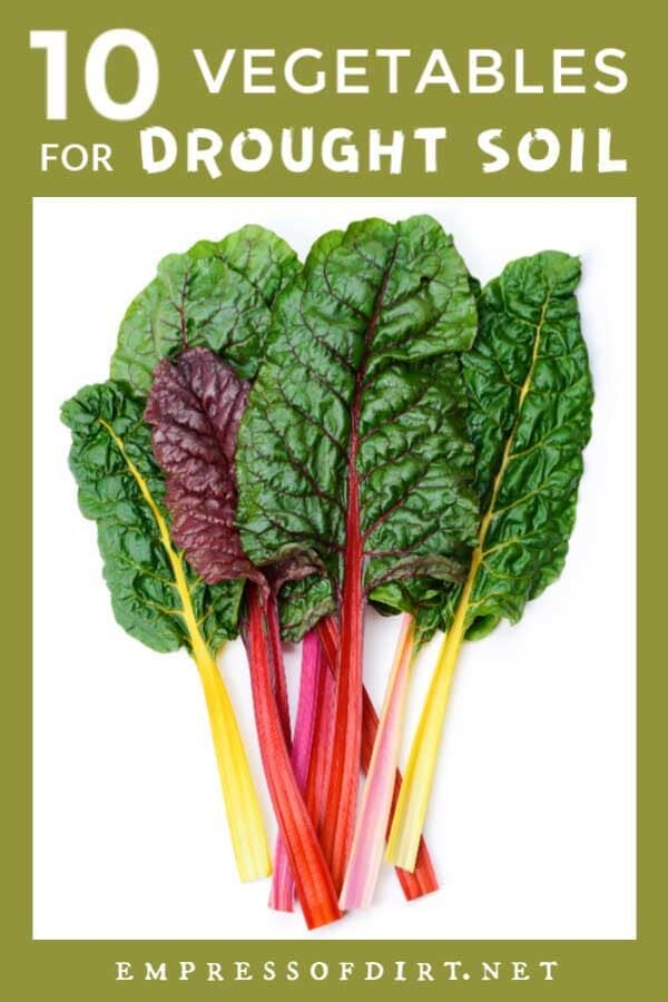 10 Best Vegetables for Drought Soils