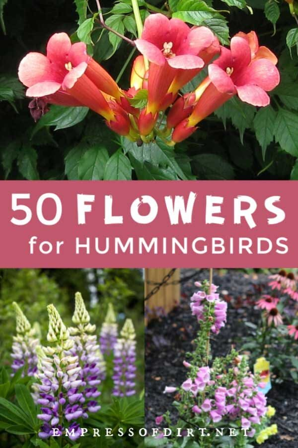 50 Flowers for Hummingsbirds and Sugar-Water Recipe