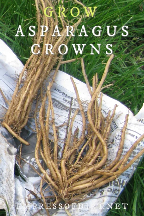 How to plant asparagus crowns and start a new perennial crop.