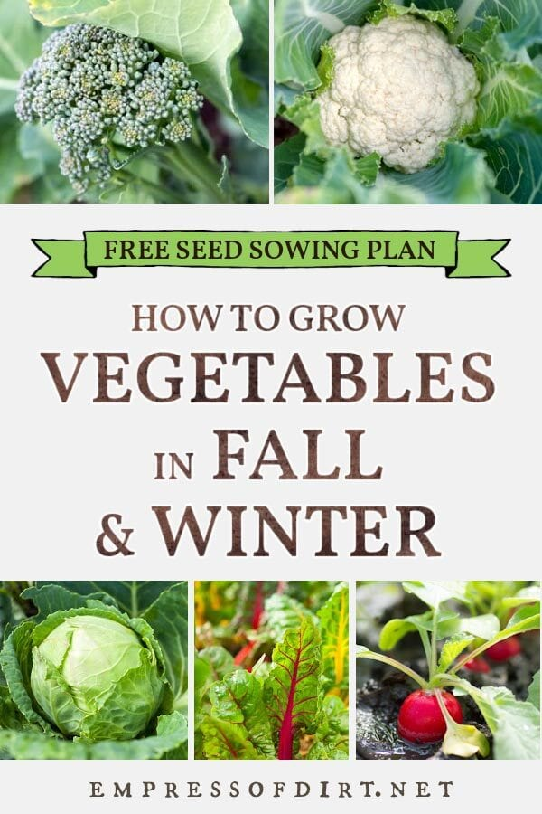 Vegetables to grow in cold seasons including broccoli, cauliflower, Swiss chard, and radishes.