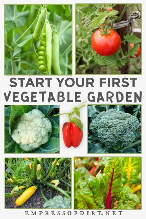 Examples of vegetables to grow in a raised garden bed including peas, tomatoes, cauliflower, broccoli, zucchini, and Swiss chard.