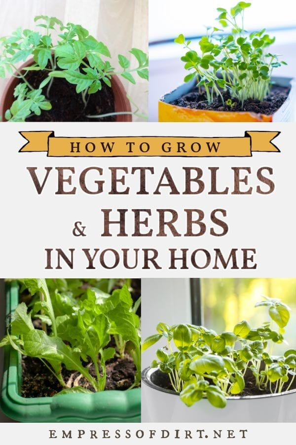 Grow Vegetables Indoors Easy Beginner S Guide