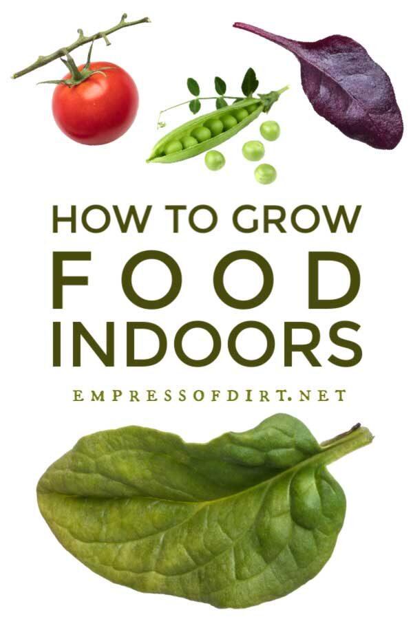Grow Vegetables Indoors (Easy Beginner's Guide)