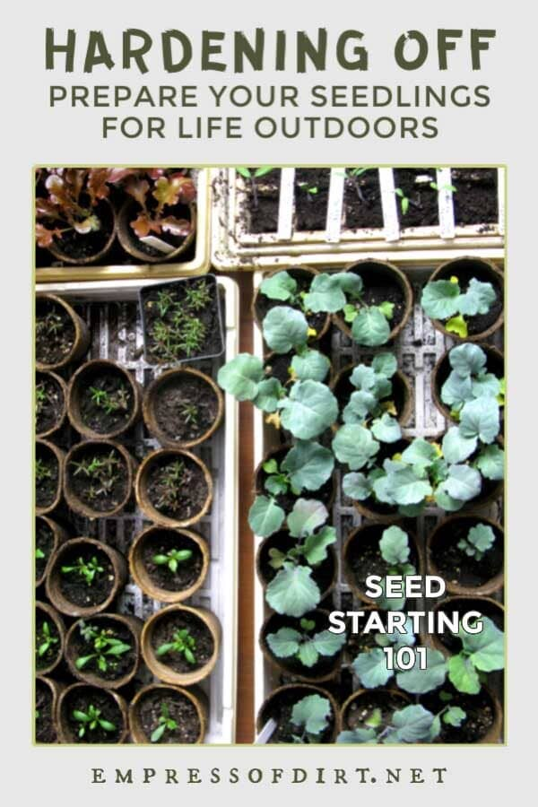 How to Prepare Indoor Seedlings for Transplanting