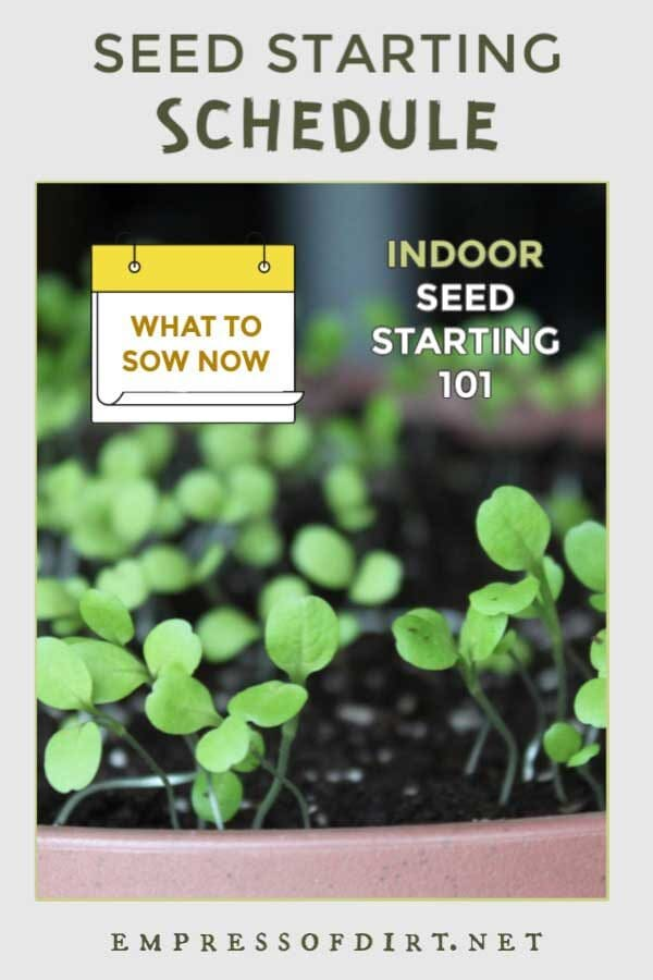 Indoor Seed Starting Plan (Weekly Schedule)