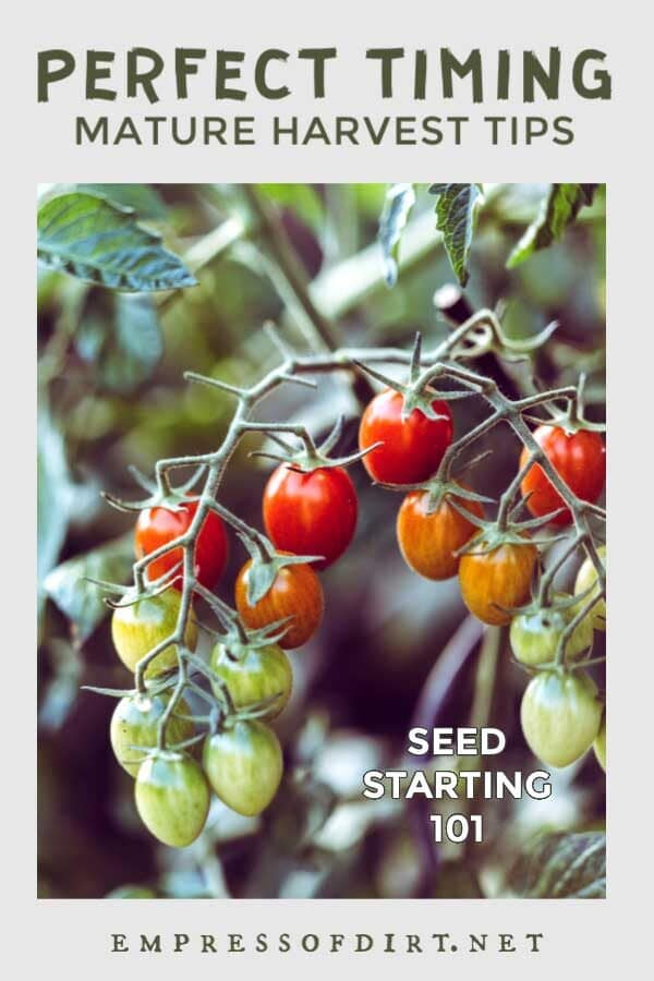 Days to Maturity: Sowing Seeds at the Right Time