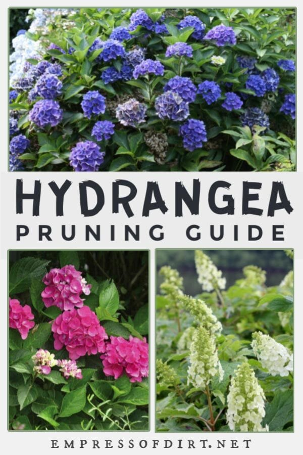 Hydrangea Pruning Guide For Beginners Empress Of Dirt