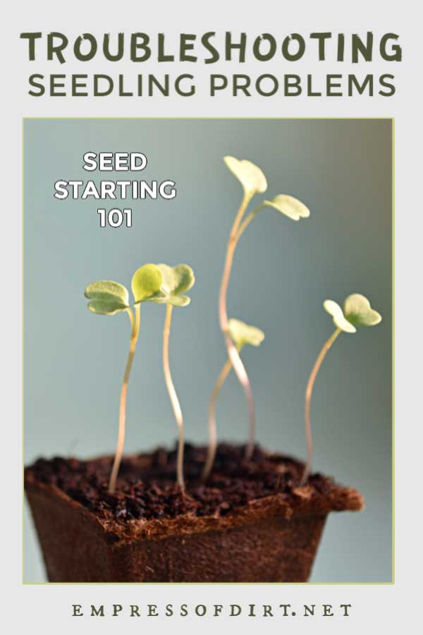 How To Troubleshoot Seed Sowing Problems Empress Of Dirt