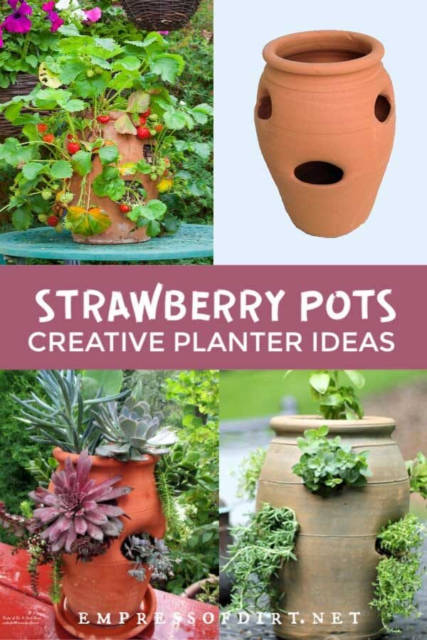 5 Strawberry Pot Planter Ideas (Flowers, Herbs, and Vines)