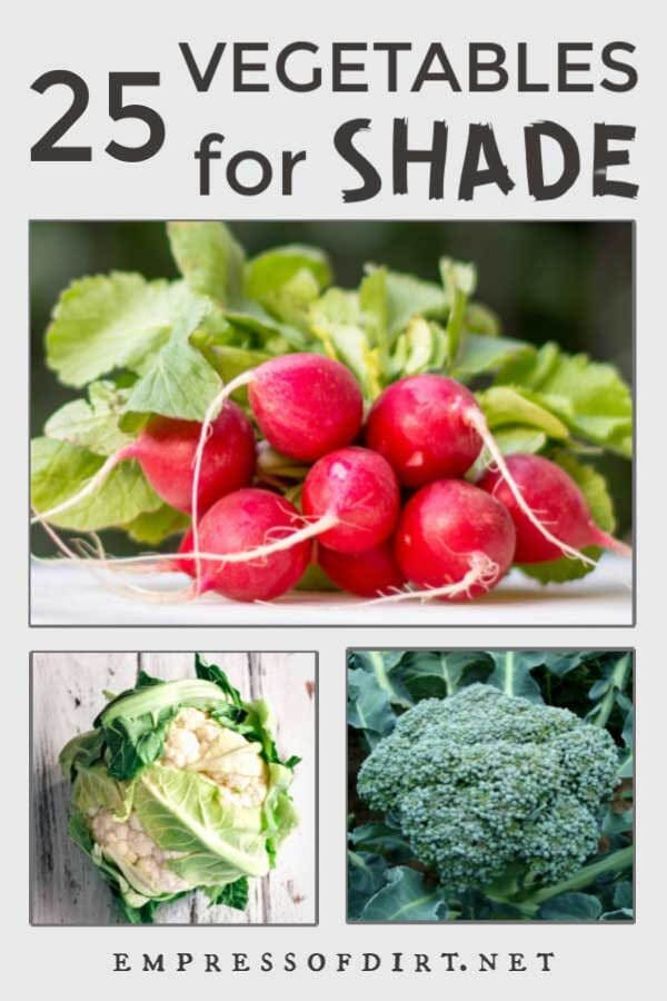 25 Vegetables You Can Grow in Shade