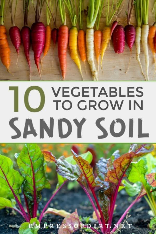 10 Best Vegetables for Sandy Soils