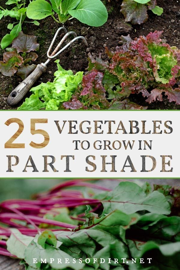 Examples of vegetables to grow in shade conditions including lettuces and chard.