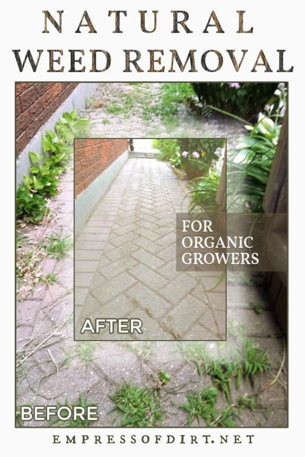 A brick pathway before and after removing weeds.