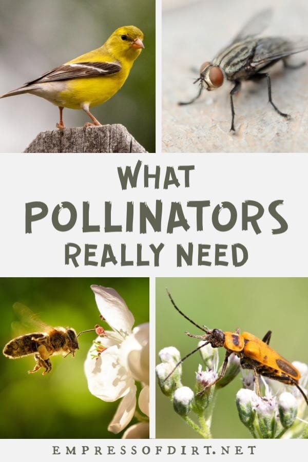 Examples of plant pollinators including a goldfinch bird, fly, bee, and beetle.