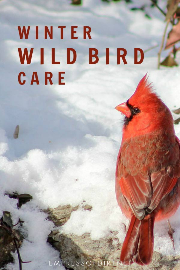 How to care for wild birds during winter in the garden.