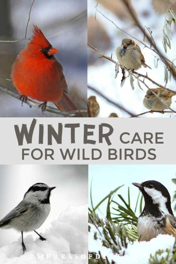 Birds in trees in the winter garden.