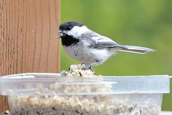 Do It Yourself Home Design: Make A Chickadee Nesting Box