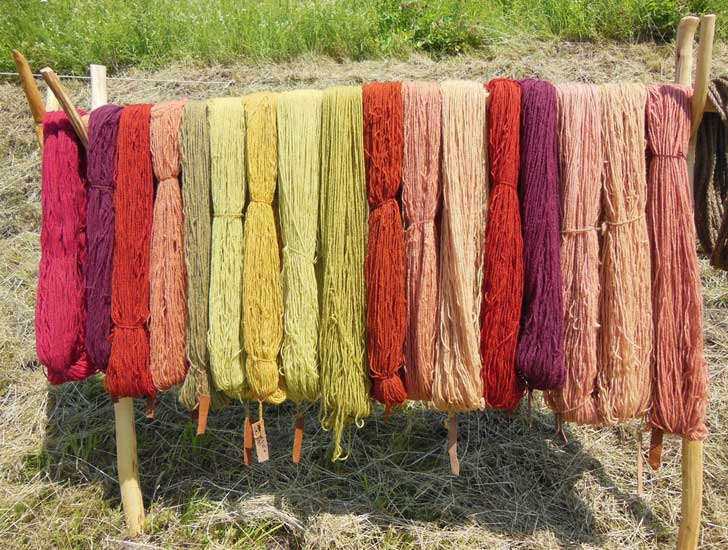 Hand-dyed skeins of wool yarn.