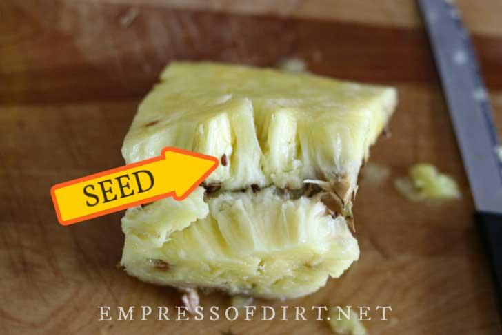 Slice of pineapple fruit showing seeds inside.