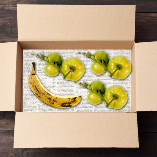 Green tomatoes ripening in box with a banana.