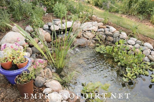 New garden pond with plants.