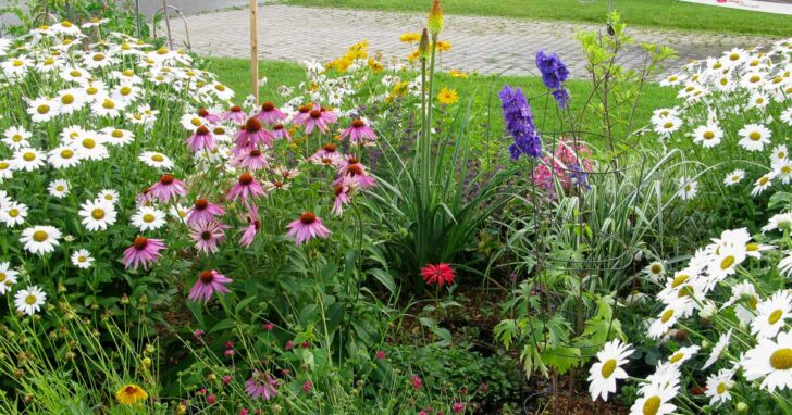 Colorful perennial flower garden created on a low budget.