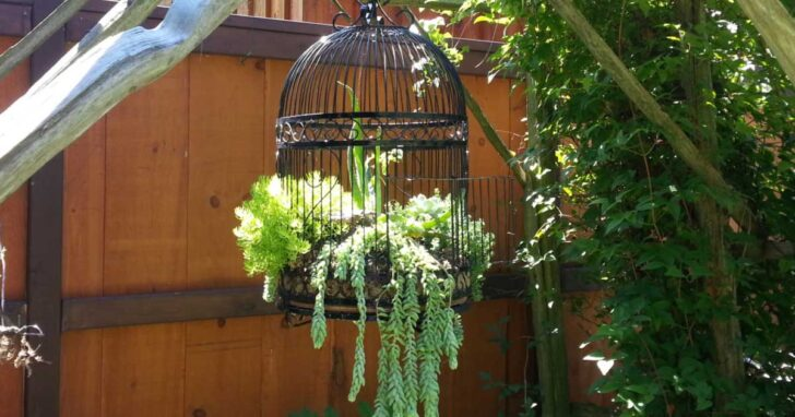 Birdcage planted with succulents.