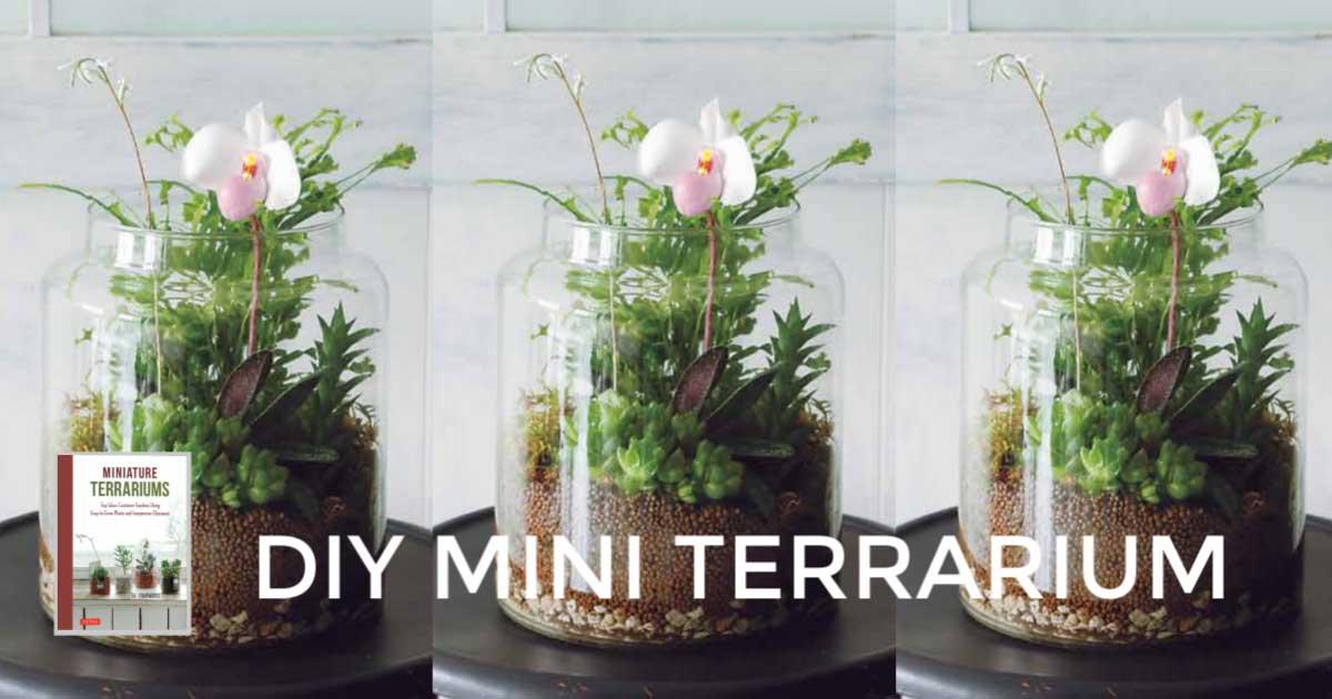 Make A Mini Terrarium 5 Step Tutorial Empress Of Dirt