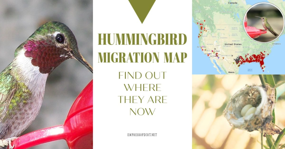 2019 Hummingbird Migration Map Find Out When To Expect