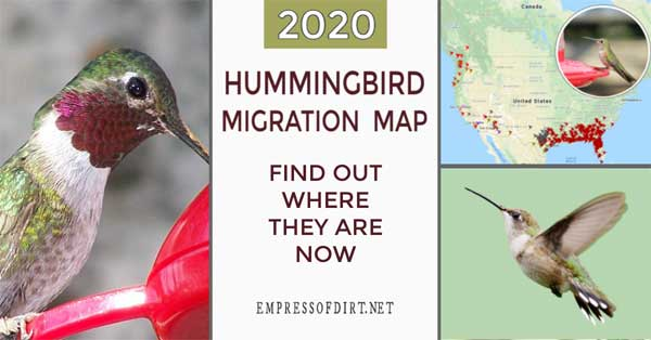 Hummingbird migration map.