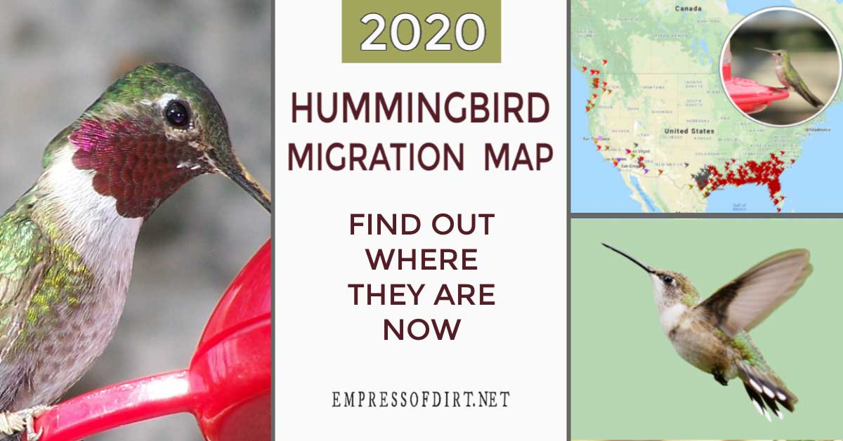 Show Map Going From Westminster Co To Saranac Lake Ny Without Going To Canada 2020 Hummingbird Migration Map (Find Out When to Expect Them)