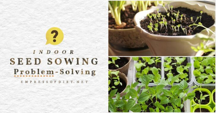 Seedlings that may fail to germinate or stop growing.