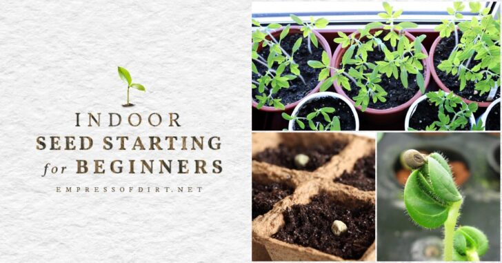 Sowing seeds, a seedling, and young plants growing indoors.