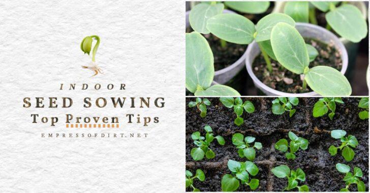 Various seedlings growing indoors.