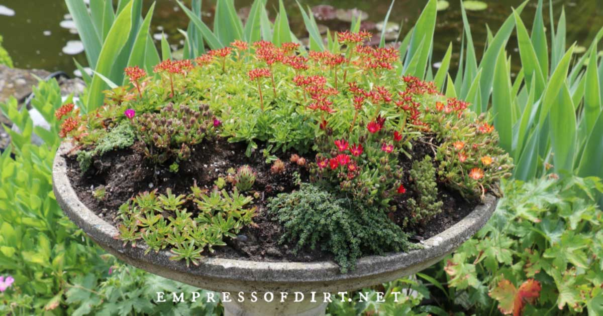 Birdbath made into a garden planter.
