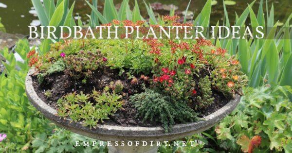 A birdbath turned into a sedum and flower planter.
