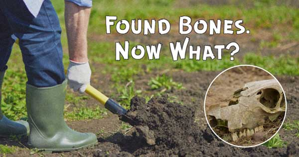 Found bones in your garden? Here's what you need to do.