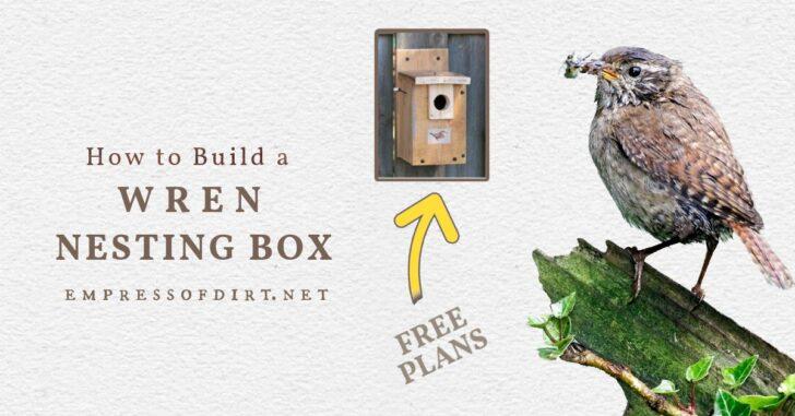 Wren bird and a wren nesting box.