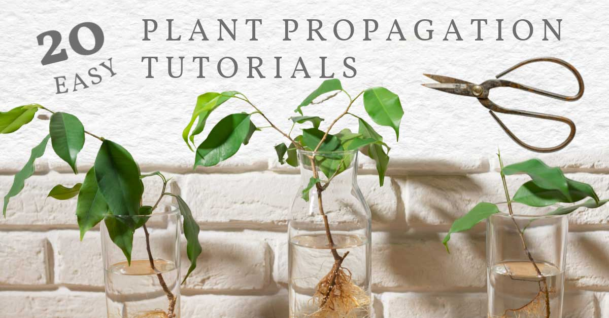 Propagating plant cuttings in water.