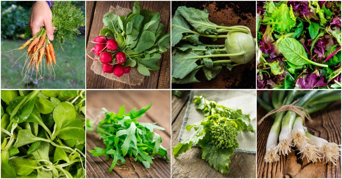 Fast-growing vegetables including leafy greens, radishes, and bok choy.