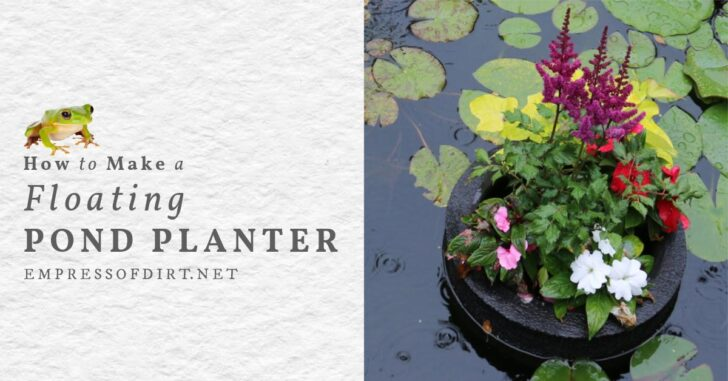 A floating pond planter with flowers in a garden pond.