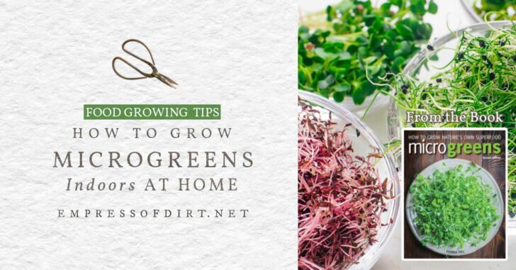 Various microgreens grown at home including broccoli and sunflower.