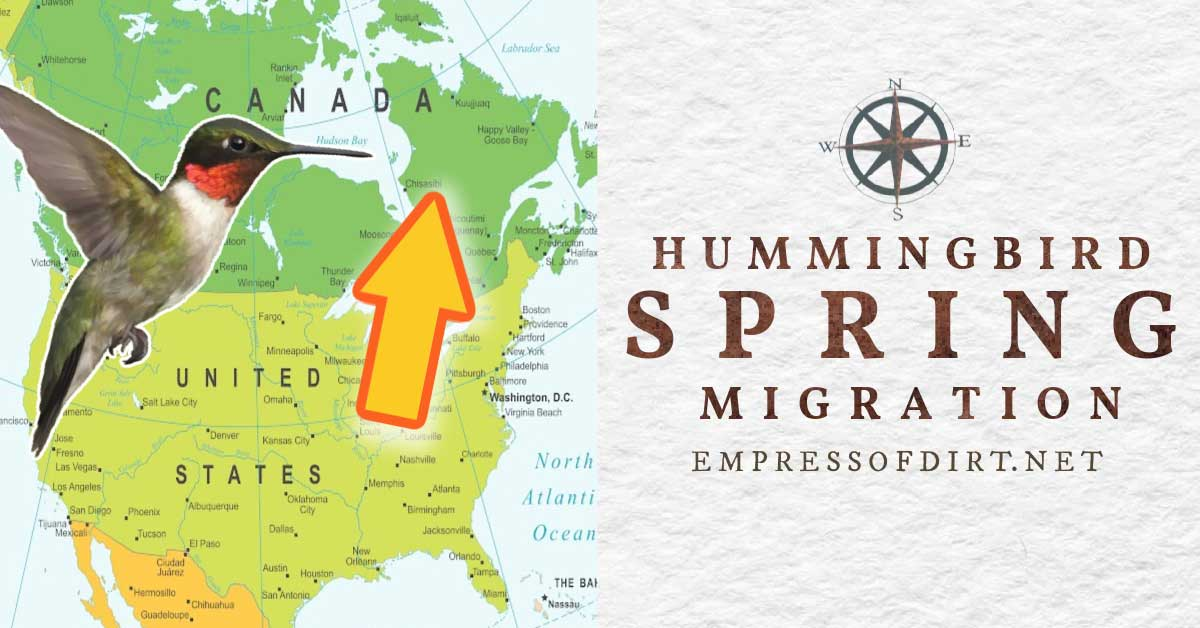 Map of spring hummingbird migration in Canada and the United States.