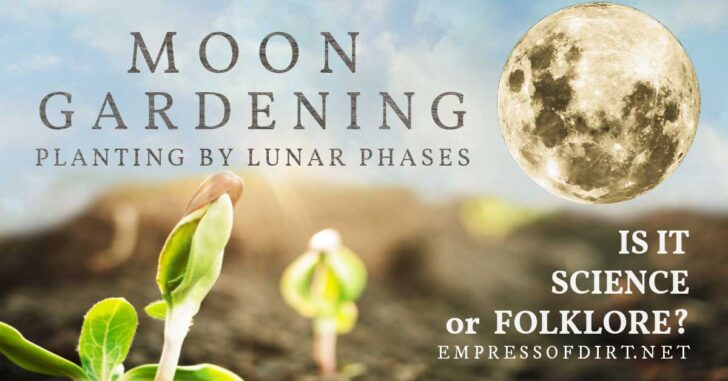 Moon in the sky above seedlings emerging from the soil.
