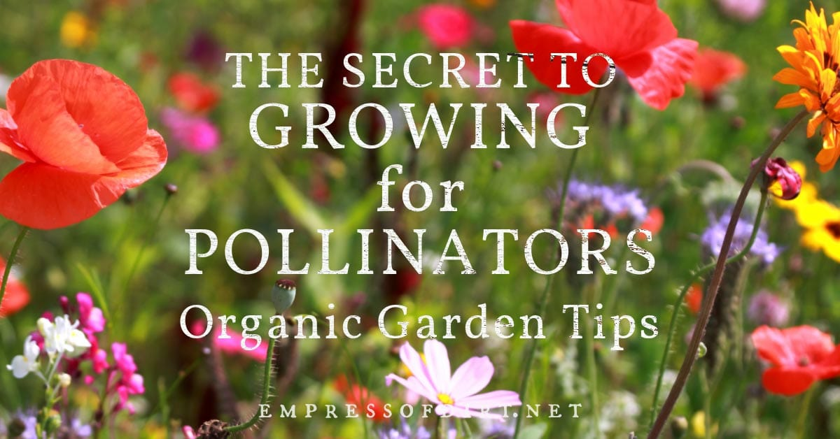 Growing a variety of flowering plants to support a variety of pollinators.